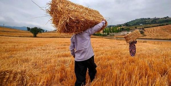 حاجی میرزایی: 70 درصد کشاورزان کم سواد یا بی سوادند