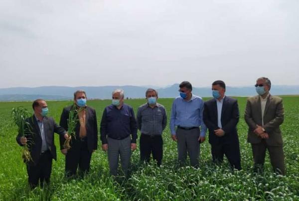 خبرنگاران طرح های تحقیقی و ترویجی، مقدمه جهش فراوری در بخش کشاورزی است